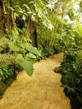 Rota na floresta úmida tropical - jardim botânico Troja de Praga Imagens de Stock Royalty Free