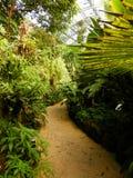 Rota na floresta úmida tropical - jardim botânico Troja de Praga Imagem de Stock