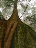 Rota och trädet Fotografering för Bildbyråer