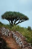 Rota próxima da caminhada de Dragon Tree em Santo Antao, Cabo Verde Cabo Verde imagem de stock royalty free