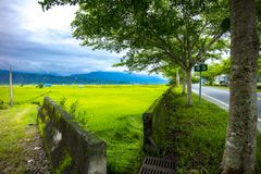 Rota 193 Taiwan Paddy Field Imagens de Stock Royalty Free