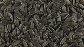 Rotación lenta del montón de las semillas de girasol metrajes