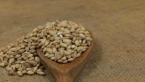 Rotación, montones de los granos de la cebada de perla, cayendo de una cuchara de madera en la arpillera metrajes