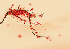 Rotahornbaum im Herbst Stockfotos