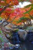 Rotahorne und Wasserfälle lizenzfreies stockfoto