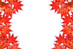 Rotahornurlaub des bunten Herbstes mit Raum für Text oder Symbol Stockbild