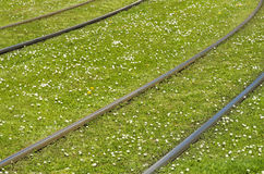 Rotaie su un prato inglese verde con i fiori Fotografie Stock