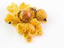Rotanfruit Royalty-vrije Stock Fotografie