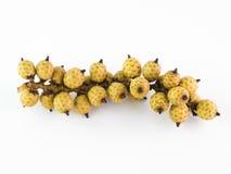 Rotanfruit Stock Fotografie