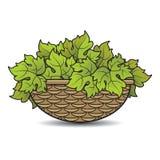 Rotanmand met druivenbladeren in kleur royalty-vrije illustratie