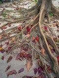 Rotar av ett tropiskt tr?d royaltyfria foton