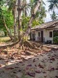 Rotar av ett tropiskt tr?d royaltyfri foto