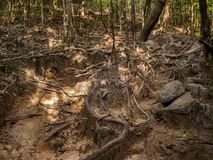 Rotar av ett tropiskt tr?d royaltyfri fotografi