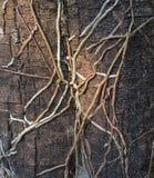 Rotar av orkidér Royaltyfri Fotografi
