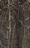 Rotar av orkidér på skäll Royaltyfri Bild