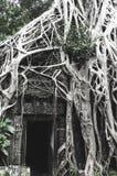 Rotar av stort träd på Ta-studentbalen Fotografering för Bildbyråer