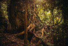 Rotar av träden i djungeln Landskap för Rainforest för naturregnskog tropiskt Malaysia Borneo, Sabah arkivfoto