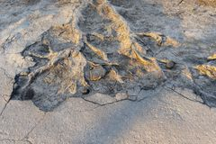 Rotar av trädet spirade till och med asfalten arkivbild