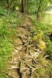 Rotar banan till och med en skog i Cheile Nerei naturlig reservation Arkivbild