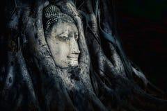 Rotar head bevuxet för Buddha med trädet, Wat mahathat Ayutthaya, T Arkivfoton