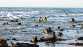 Rotar i havet arkivfilmer