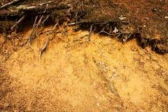 Rotar i lera Arkivfoton