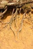Rotar i lera Royaltyfri Fotografi
