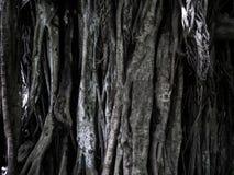 Rotar och treetbakgrundstextur Royaltyfri Fotografi