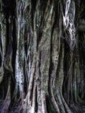 Rotar och treetbakgrundstextur Royaltyfria Foton