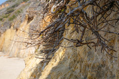 Rotar på stranden Royaltyfri Bild