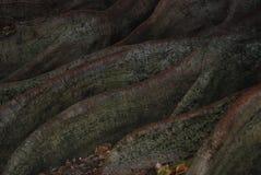 Rotar textur Royaltyfria Bilder