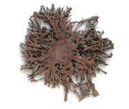 Rotar trädet som isoleras på en vit bakgrund Arkivfoto