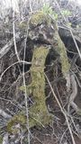 rotar treen Royaltyfria Foton