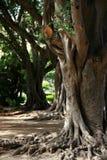 rotar treen Arkivbilder