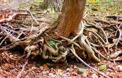 rotar treen Royaltyfri Foto