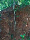 rotar treen Fotografering för Bildbyråer