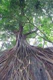 rotar treen arkivfoton