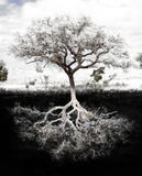 rotar treen royaltyfri fotografi