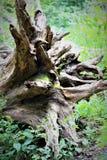 rotar treen arkivfoto