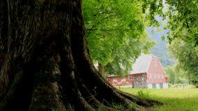 rotar treen Stort träd med det gröna fältet arkivfoto