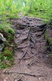 rotar trees Arkivbild