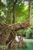 Rotar vid floden. Arkivbild