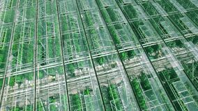 Rotate orbit close up panorama aerial fly off over industrial greenhouses with green sprouts, sun and sky reflected in