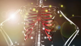 Rotate skeleton with flashlight. 3D rendered stock footage