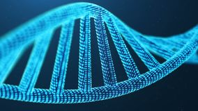 Rotated 3D rendered Artifical Intelegence DNA Molecule. DNA is converted into a binary code. Concept binary code genome