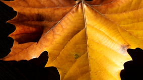 Rotating autumn leaf Royalty Free Stock Photos
