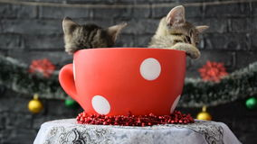 Rotating the cup with sleepy kittens stock video footage