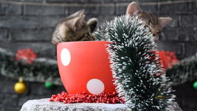 Rotating the cup with sleepy kittens stock video