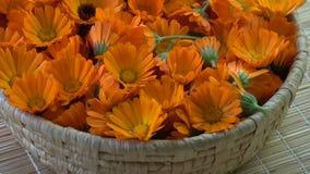 Rotating fresh medical marigold calendula flowers in basket stock video