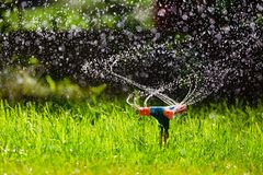 Garden sprinkler watering grass. Rotating garden sprinkler watering grass at sunset stock image